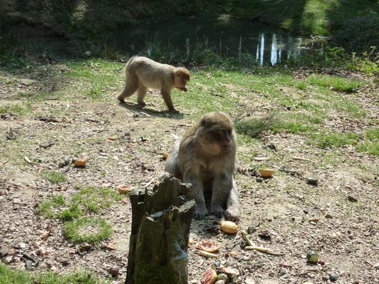 VD #535, Eifel, 7. Tag, Wild- und Erlebnispark Daun
